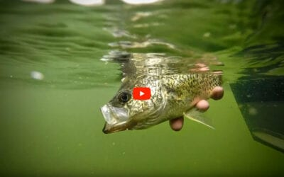 Bobber Fishing Crappies