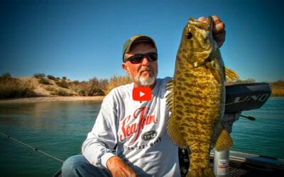Lake Havasu Smallmouth Bass