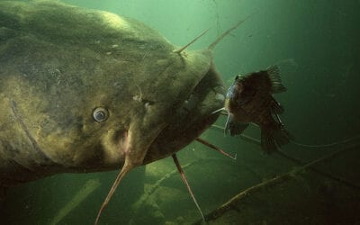 10 Best Catfish Baits of All-Time