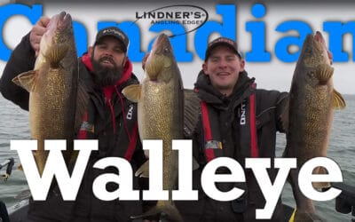 Canadian Walleye